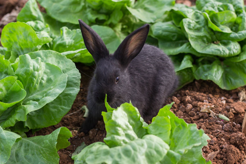 Learn How to Get Rid of Rabbits in Your Garden for Good ...